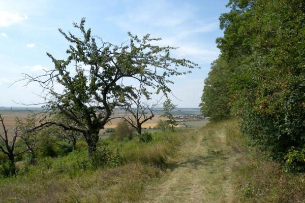 Chotuc - pohled do obce