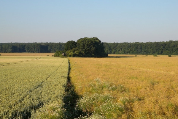 Pole a lesy v okolí Záhornic