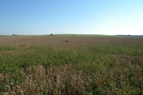 Pole a lesy v okolí Záhornic - Zvědavý srcnec